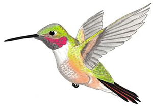 hummingbird_Algorithm_Google_SEO